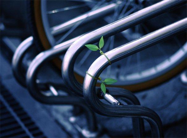 leaf_tie