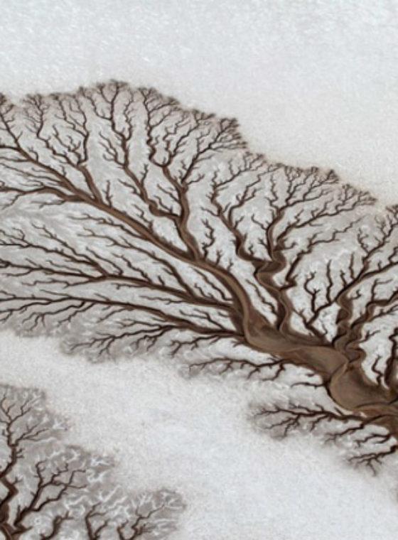 Desert Surface