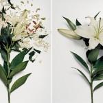 broken flowers 3
