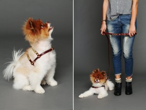 Free People Pet 4