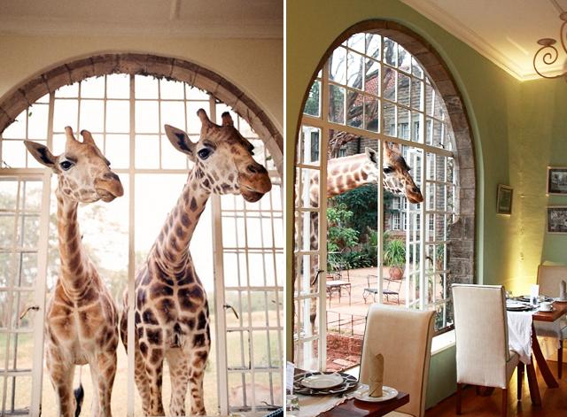 Giraffe Manor Honestly Wtf