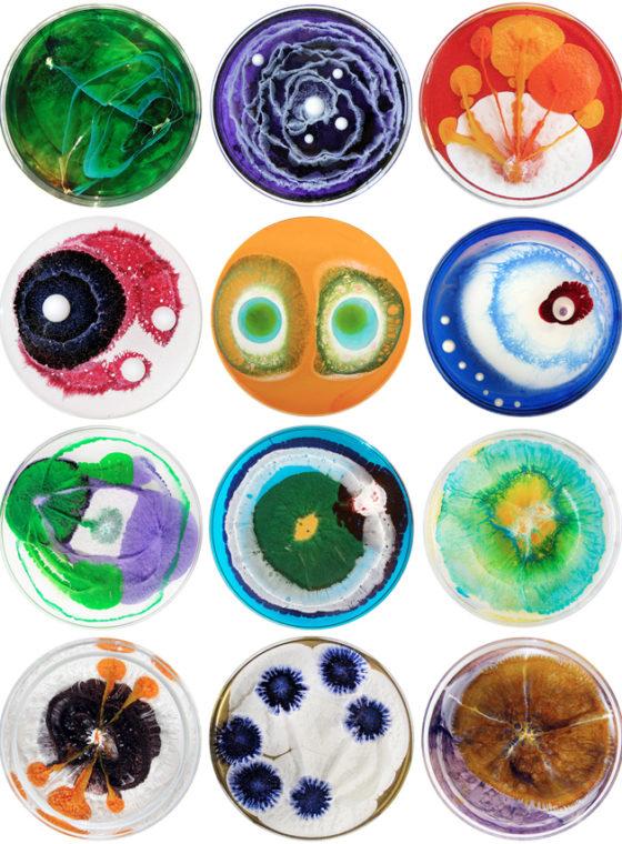Daily Petri Dish