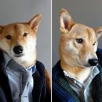 mensweardog6