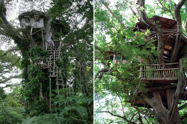 treehouse 8