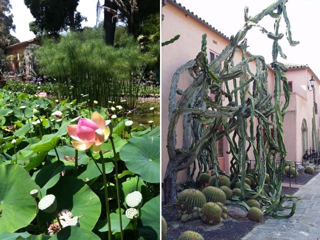 lotusland 4