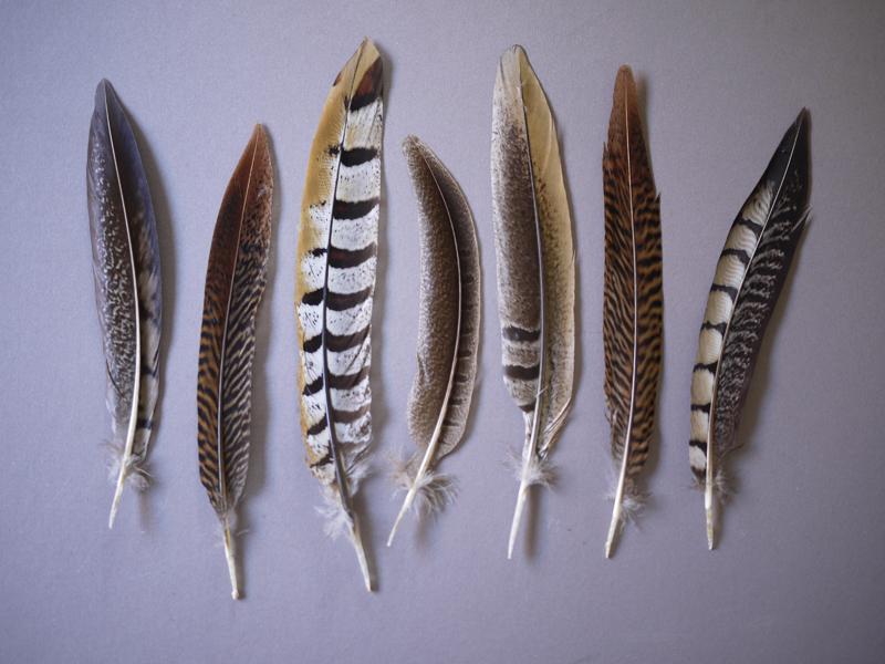 featherornament2