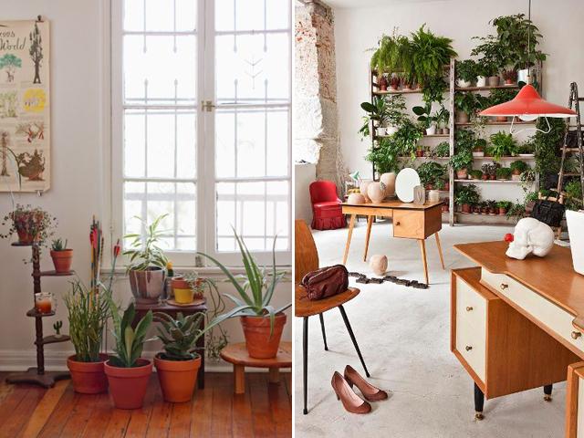 indoor garden 5