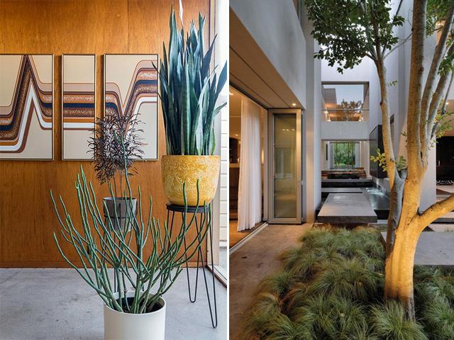 indoor garden 6
