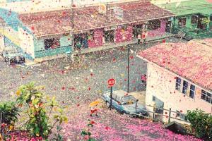 petalscostarica1