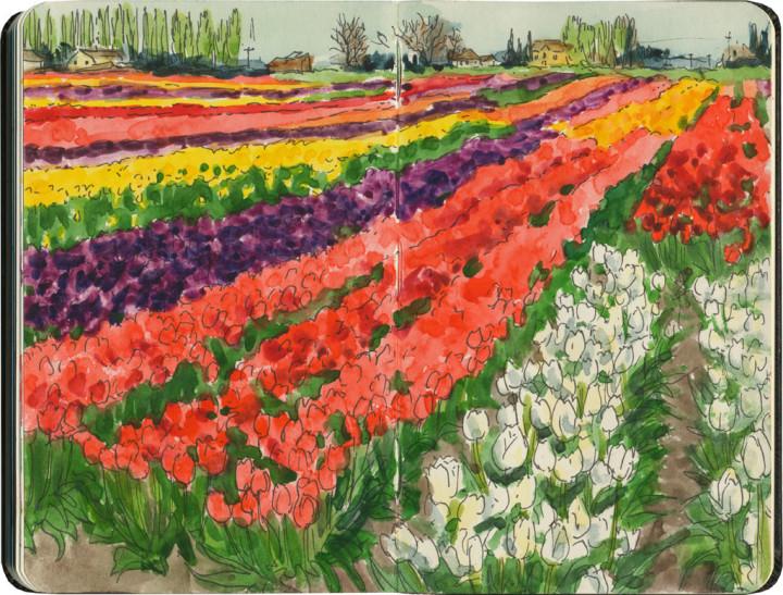 chandler_oleary_tulip_festival_2015_rainbow-720x547
