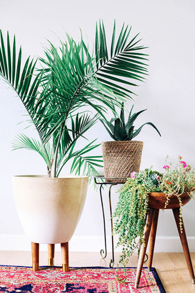 Mid century indoor planters for Modern indoor plants