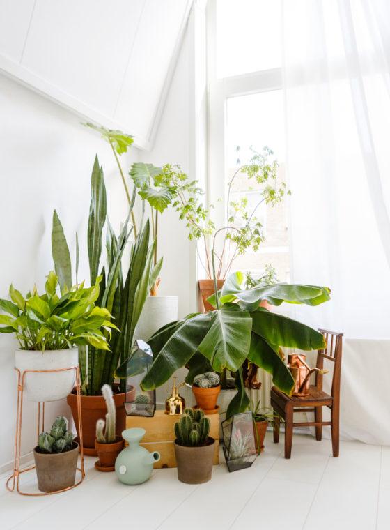 Mid-Century Indoor Planters