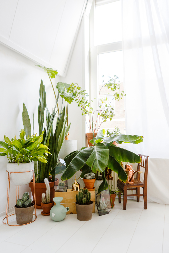 Mid Design With Houseplant Midcentury Modern Style Home
