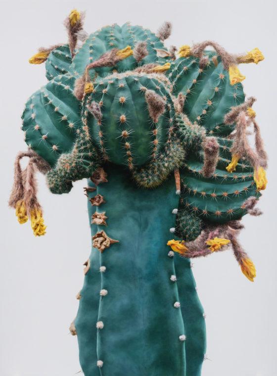 Hyperrealistic Cacti