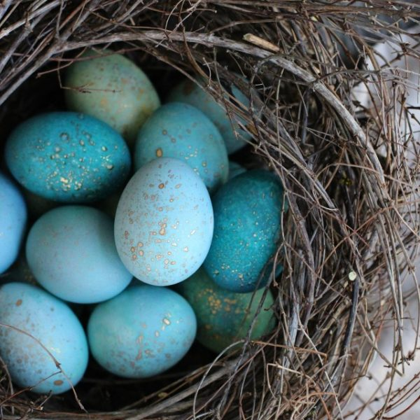 DIY Naturally Dyed Robin Eggs